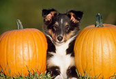 PUP 35 GR0007 01