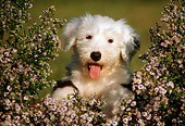 PUP 35 GR0011 01