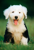 PUP 35 GR0012 01