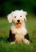 PUP 35 GR0012 04