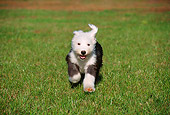 PUP 35 GR0014 01