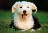 PUP 35 GR0021 01