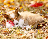 PUP 35 YT0003 01