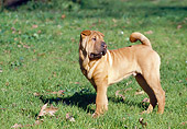 PUP 36 CB0004 01