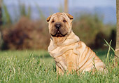PUP 36 CB0006 01