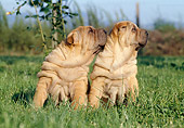 PUP 36 CB0008 01
