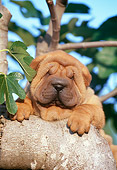 PUP 36 CB0009 01
