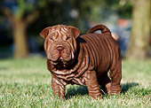 PUP 36 CB0012 01