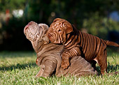 PUP 36 CB0016 01