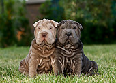 PUP 36 CB0017 01