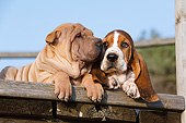 PUP 36 CB0019 01