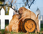 PUP 36 CB0023 01