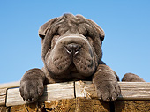 PUP 36 CB0024 01
