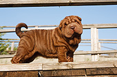 PUP 36 CB0025 01