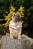 PUP 36 CE0008 01
