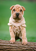 PUP 36 GR0007 01