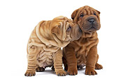 PUP 36 JE0004 01