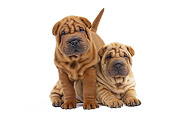 PUP 36 JE0005 01