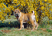 PUP 36 JN0001 01