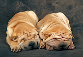 PUP 36 KH0014 01