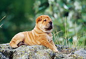 PUP 36 KH0015 01