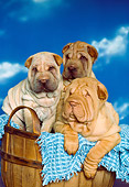 PUP 36 RK0026 15