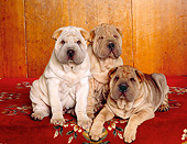 PUP 36 RK0051 18