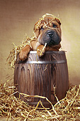 PUP 36 XA0001 01