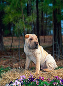 PUP 36 CE0003 01