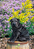 PUP 36 CE0004 01