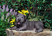 PUP 36 CE0005 01