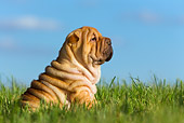 PUP 36 KH0002 01