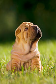 PUP 36 KH0004 01