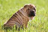 PUP 36 KH0006 01