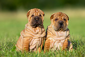 PUP 36 KH0008 01