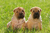 PUP 36 KH0009 01