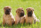 PUP 36 KH0010 01