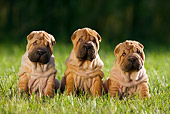 PUP 36 KH0011 01