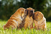 PUP 36 KH0012 01