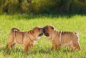 PUP 36 KH0013 01
