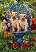PUP 36 RC0001 01
