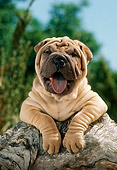 PUP 36 RC0002 01