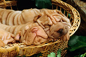 PUP 36 RC0005 01