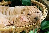 PUP 36 RC0005 02