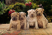 PUP 36 RC0007 01
