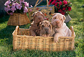 PUP 36 RC0008 01