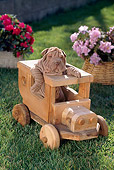 PUP 36 RC0009 01