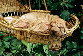 PUP 36 RC0010 01