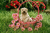 PUP 36 RC0012 01