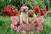 PUP 36 RC0013 01